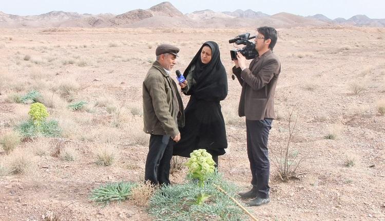 کاشت گیاه نادر انغوزه در مراتع شهرستان فردوس